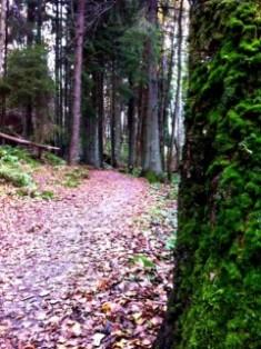 Skog Änggårdsbergens reservat