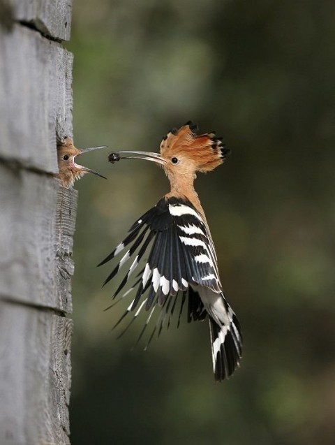 Cool fågelbild - Barribo